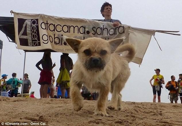 Шотландський бігун збирає кошти на вивезення з Китаю бездомного собаки