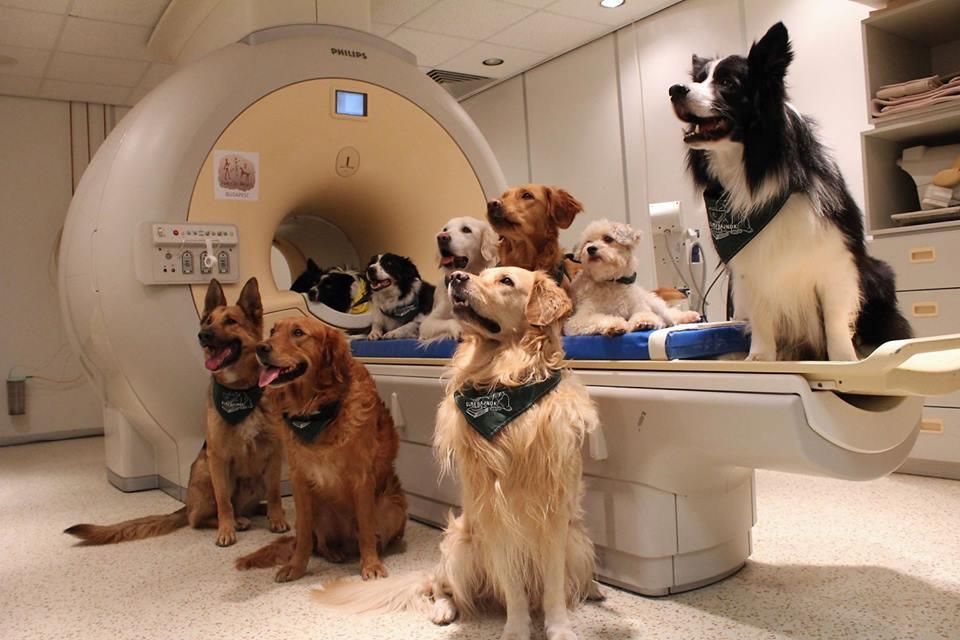 Собака розумний – і це вже доведено!