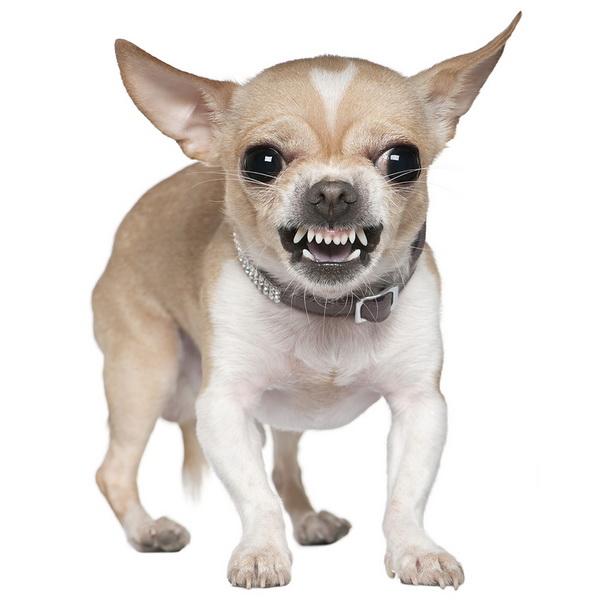 Страх і агресія у собак споріднені тривожності людини