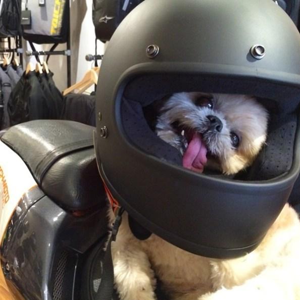 429dmarnie-the-dog-540def397ffaa