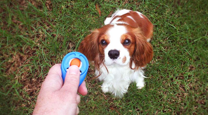 Дресирування собак – с клікіром чи без