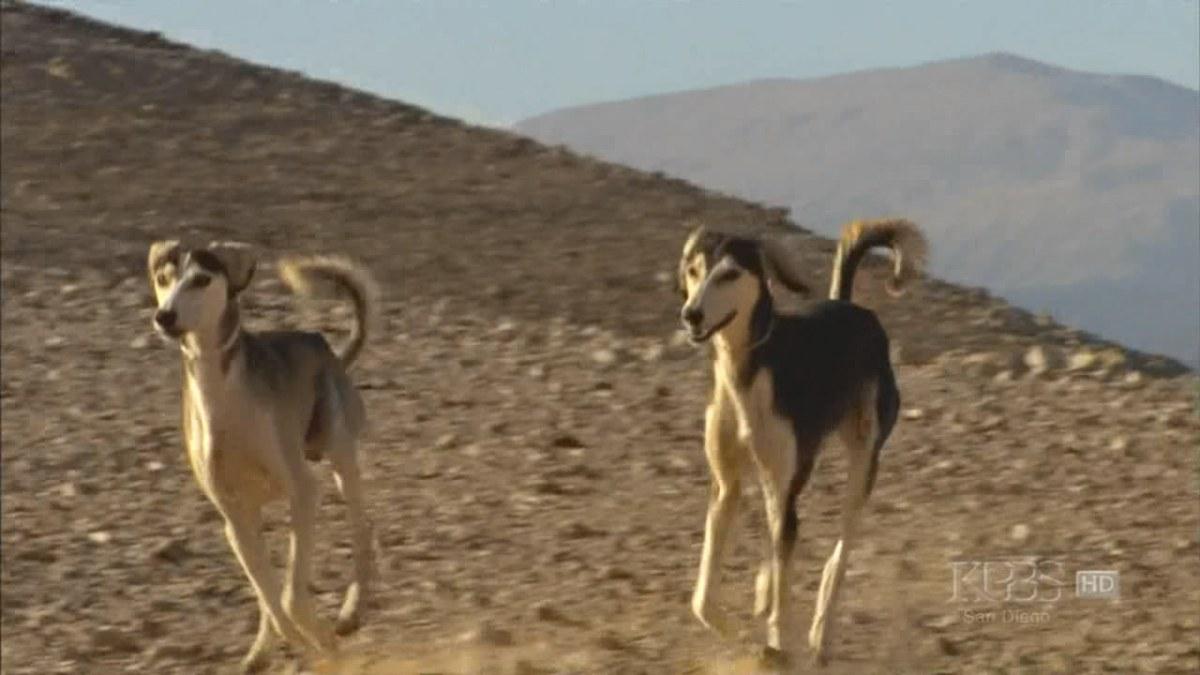 Цікаві фільми та книги про історію появи та поведінку собак