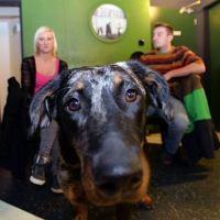 Психологія собак: соціалізація та співпраця з людиною