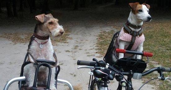 Вперше: DogCycling Kyiv – велопробіг з собаками