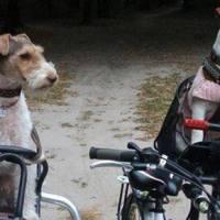 Вперше: DogCycling Kyiv - велопробіг з собаками