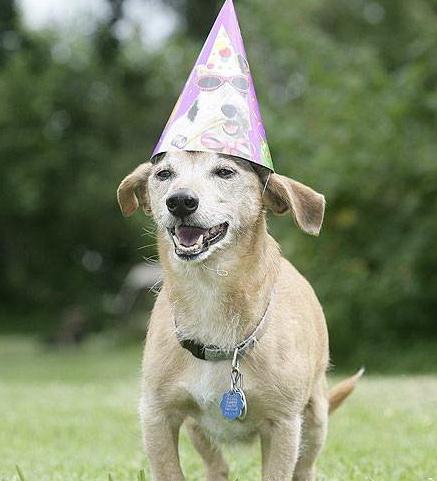Найстаршій собака в світі майже дожила до 30 років!