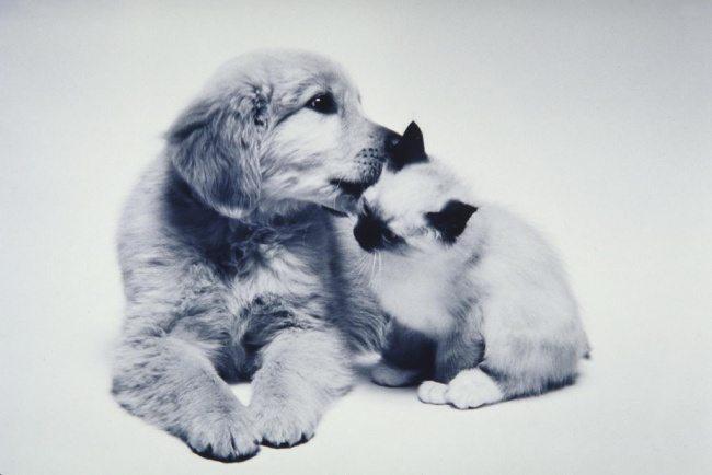 1-dog-and-cat-beautiful-heartwarming-friendship