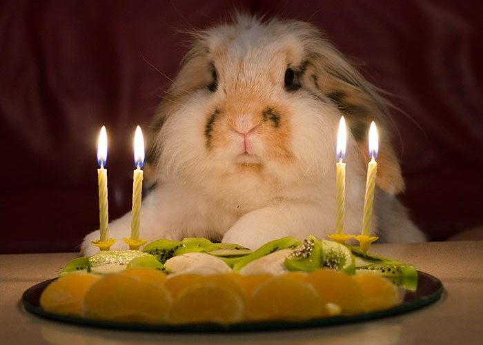 18-animals-having-better-birthday-parties-than-you
