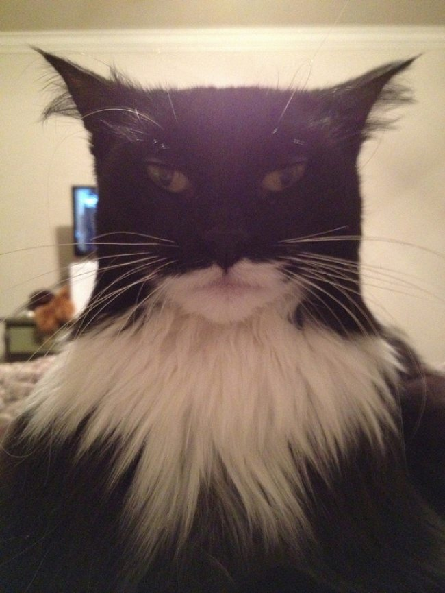 4-cat-photos-showing-the-best-of-these-creatures