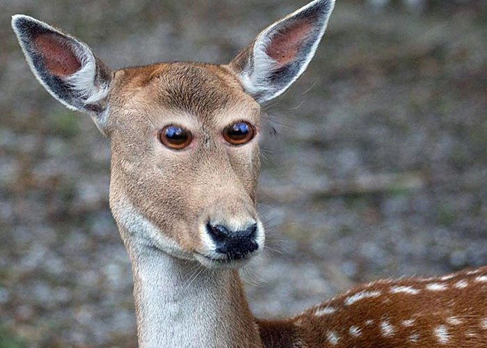 4-hilarious-animals-with-eyes-on-front