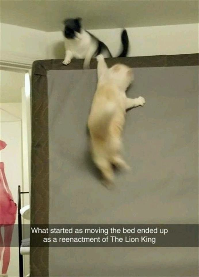 1-must-see-animal-snapchats-that-are-beyond-hilarious
