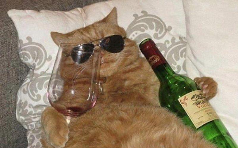 10-funny-pics-of-animals-that-got-drunk