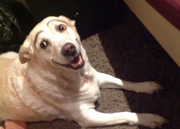 18-dogs-with-eyebrows-to-make-your-day-better