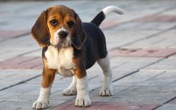 Small Of Friendliest Dog Breeds