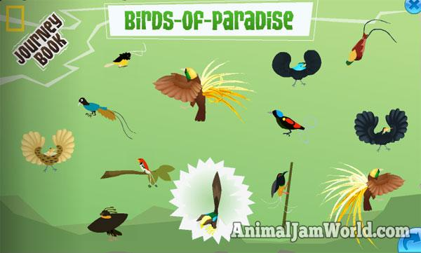 Birds of Paradise Journey Book Cheats   Animal Jam   Animal Jam World Blue Bird  The blue bird of paradise can be found on top of the cart with  the white flowers