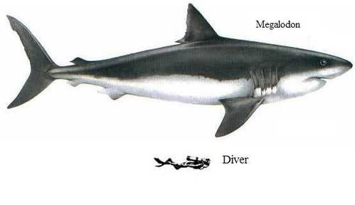 Megalodon Shark Facts