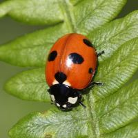 Ladybird Facts For Kids | Facts about Ladybirds For Kids