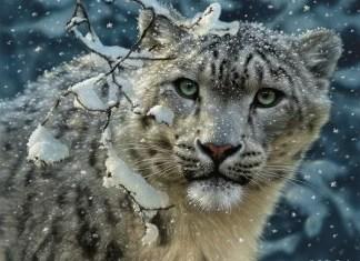 what is snow leopard | snow leopard