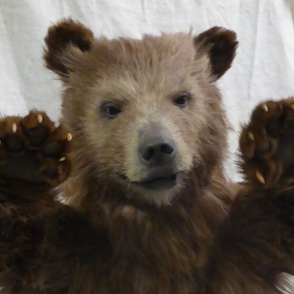 Baby Brown Bear Animatronic Costume