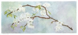 <h5>Budding Linden</h5><p>Watercolor  SOLD</p>