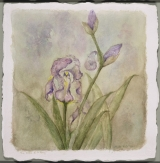 <h5> Irises of St. Remy</h5><p>Watercolor on handmade paper  SOLD</p>