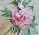 <h5>Peonia</h5><p>Watercolor</p>