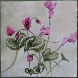 <h5>Cyclamen</h5><p>Watercolor on handmade paper</p>
