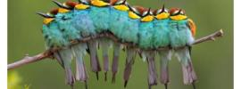 2101-colorful-caterpillar