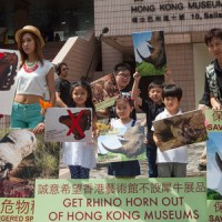 Protestors Demand Hong Kong Museum Removes Rhino Horn and Elephant Ivory