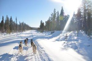 Dog sledging in Kiruna