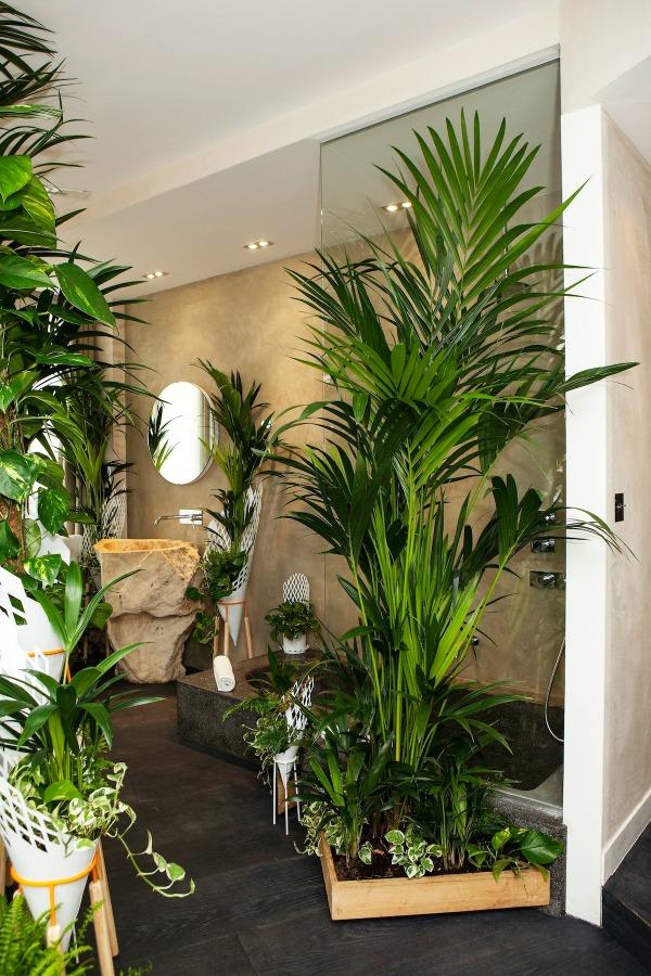Les plantes vertes dans la chambre annikapanika - Plante de salon ...