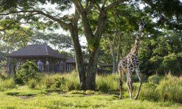 Savor the Savanna Tour at Disney's Animal Kingdom