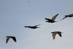birds-717365_640