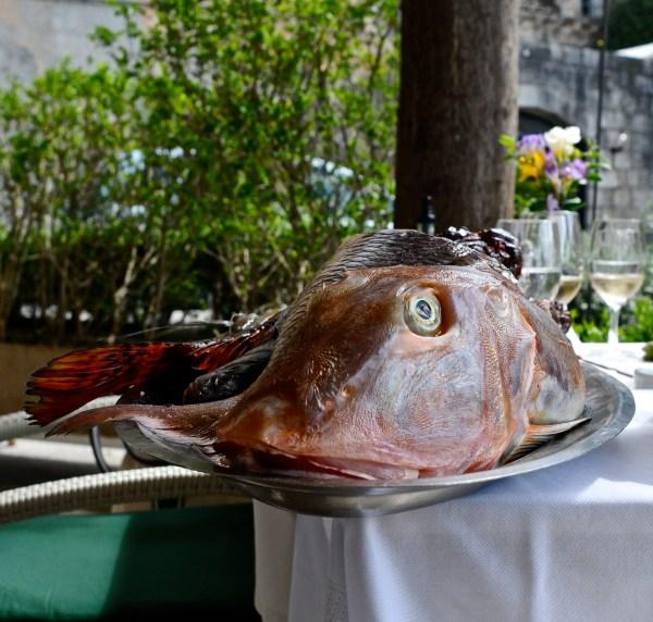 interesting fish, croatia