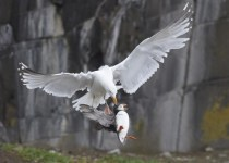 """Οι νικήτριες φωτογραφίες του Διαγωνισμού """"Wildlife 2012"""""""