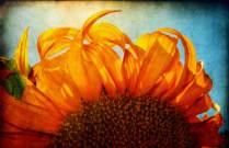 Το Ηλιοτρόπιο – Του Ευγενίου Τριβιζά