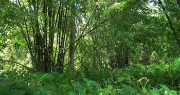 forest-assam.jpg.492x0_q85_crop-smart