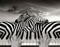 Σουρεαλιστικές φωτογραφίες του Thomas Barbey