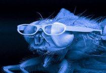 Η μετρίως έξυπνη μύγα