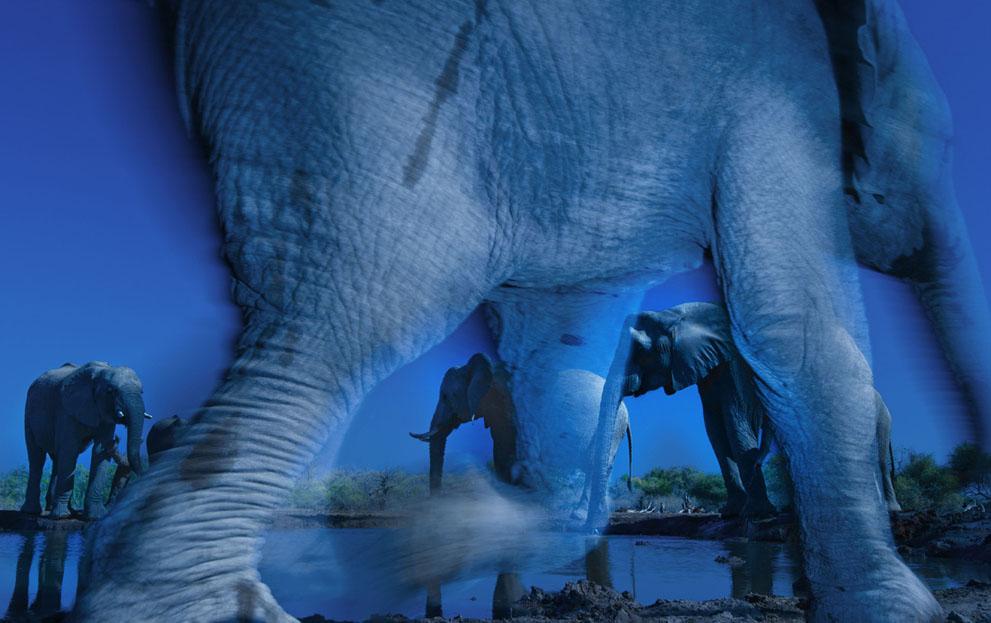 Ένα «μυστηριακό» όπως το χαρακτήρισαν οι κριτές πορτρέτο αφρικανικών ελεφάντων από τον νοτιοαφρικανό φωτογράφο Γκρεγκ ντυ Τουά απέσπασε το πρώτο βραβείο του Wildlife Photographer of the Year 2013, του σημαντικότερου ίσως διαγωνισμού φωτογραφίας της άγριας φύσης που διοργανώνεται από το Μουσείο Φυσικής Ιστορίας του Λονδίνου και το BBC Worldwide. Το «Essence  of elephants» επελέγη από διεθνή κριτική επιτροπή ανάμεσα σε 43.000 φωτογραφίες από όλο τον κόσμο.