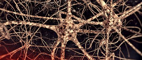 neurons_1