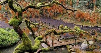 portlands-japanese-gardens-in-fall-small