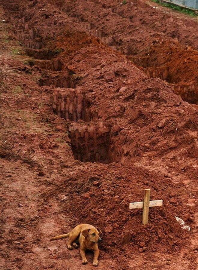 """Ο """"Leao"""", κάθεται για δεύτερη συνεχόμενη ημέρα δίπλα στον τάφο του ιδιοκτήτη του, ο οποίος πέθανε στις καταστροφικές κατολισθήσεις κοντά στο Ρίο ντε Τζανέιρο στις 15 Ιανουαρίου 2011."""
