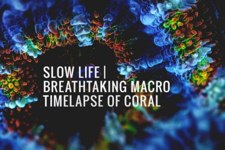 slow-life-coral-macro-timelapse1