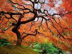 30 μαγευτικές Φθινοπωρινές εικόνες