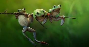 3-frogs