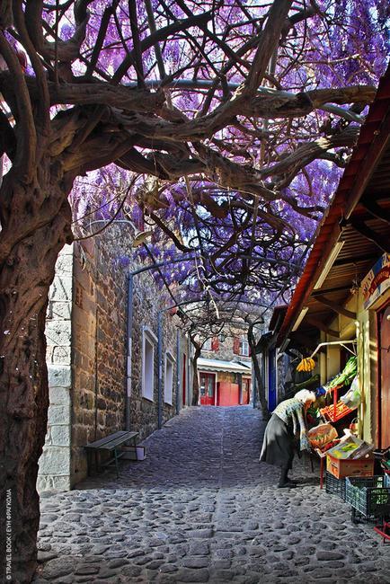 Μυτιλήνη: Το «ομορφότερο δρομάκι του κόσμου» για το 2015 είναι αυτό και βρίσκεται στον Μόλυβο