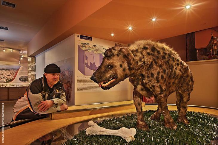 Κέντρο Προβολής Λόφου Αγ. Γεωργίου, Κιλκίς: Ταξίδι στην προϊστορία με γιγαντιαία ελάφια, ανελέητες ύαινες και νυφίτσες, πρωτόγονα βόδια, άγρια άλογα και ημίονους που ζούσαν στο Κιλκίς μέχρι πριν από 30.000 χρόνια. Ο σπηλαιολόγος Βασίλης Μακρίδης τη δεκαετία του '60 έφερε στο φως εκατοντάδες απολιθωμένα οστά και δόντια προϊστορικών πλασμάτων από τις εξερευνήσεις του στο σπήλαιο του Κιλκίς, τα οποία μελέτησε η γεωλόγος Ευαγγελία Τσουκαλά. Με τον καιρό τα ευρήματα έγιναν χιλιάδες και πλέον, μπορείτε να τα θαυμάσετε κι εσείς στο Κέντρο Προβολής Λόφου Αγ. Γεωργίου στο Κιλκίς. * Δευτέρα - Παρασκευή κατόπιν ραντεβού, Σ/Κ: 10.00-14.00, τηλ. 23413 52103