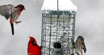 birds-around