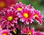 Ήρθε η Άνοιξη… Δείτε τα λουλούδια να ανθίζουν